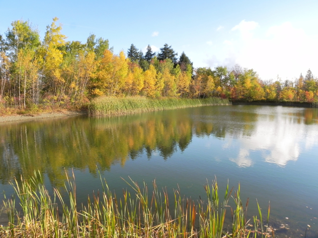 tratton Mountain Resort Pond