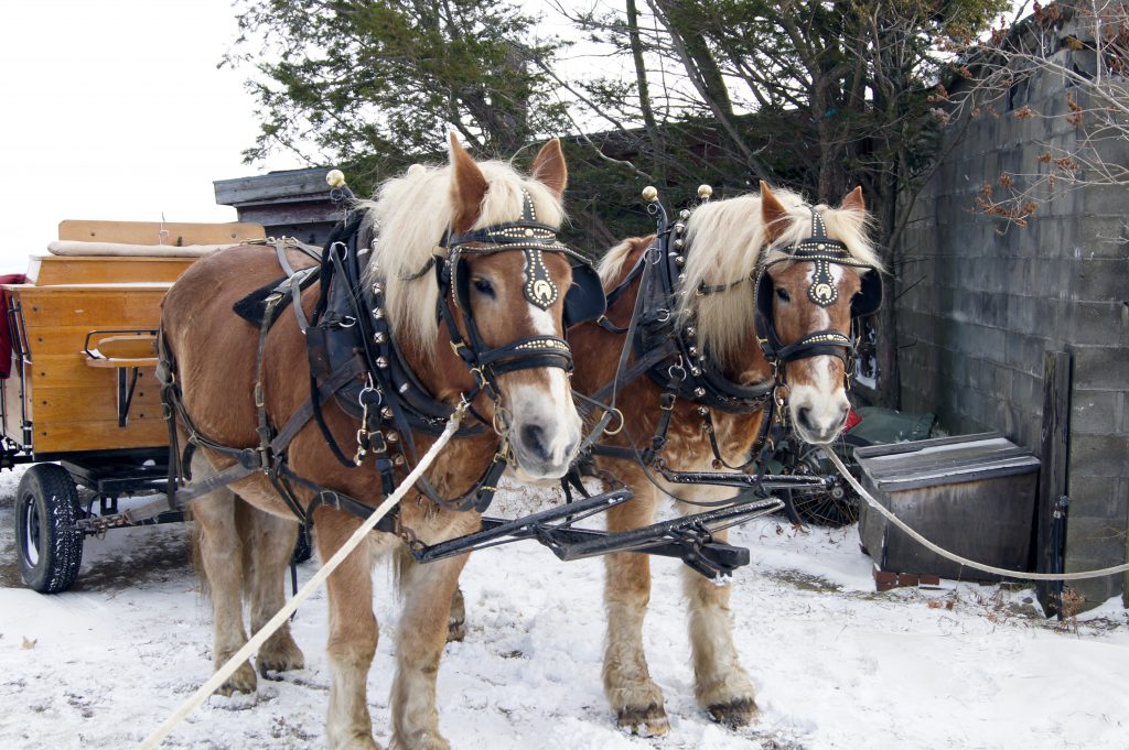 http://www.trappfamily.com/sleigh-rides.htm