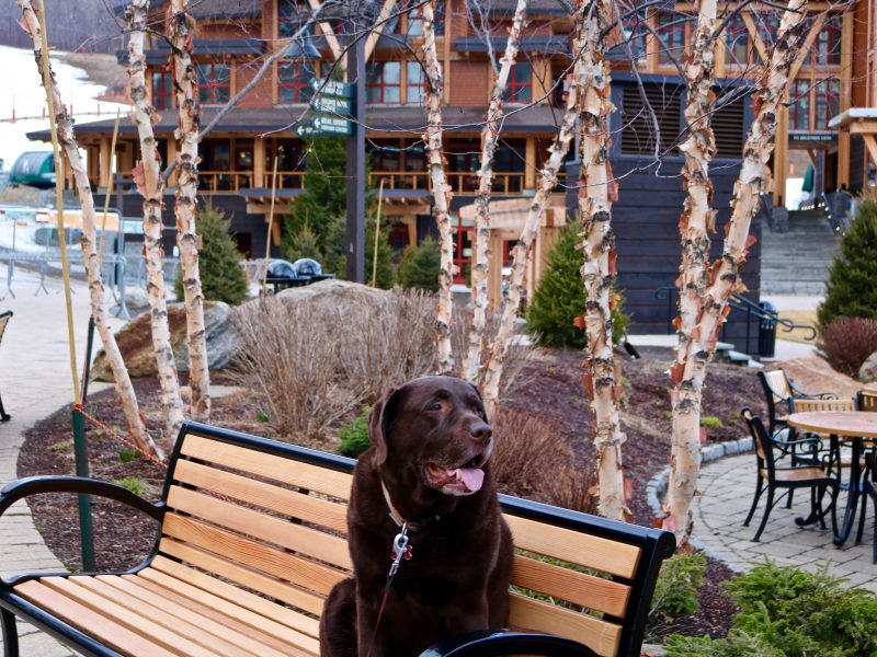 Are Ski Resorts Really Pet Friendly?