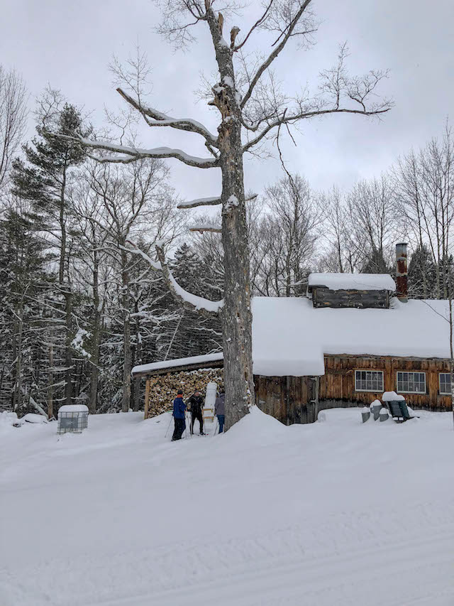 Sweet Fun on the Trapp Family Lodge Sugar Maple Tour