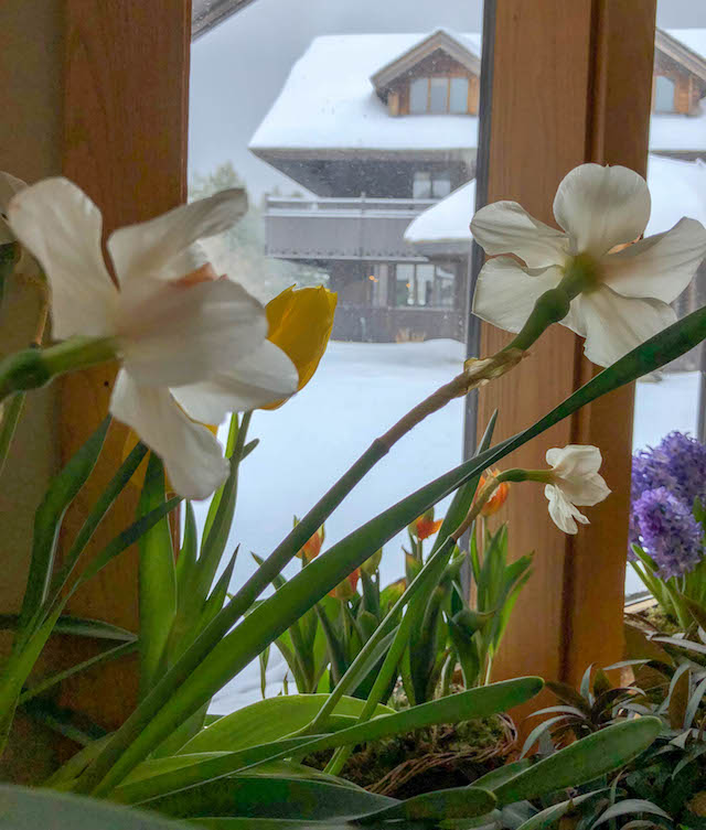 Trapp Family Lodge Winter Flowers