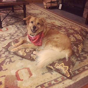 Pet friendly lodging includes dog bed and treat.